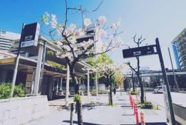 昭和ノスタルジーと出会える街・桜山