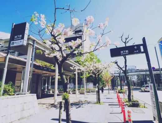 昭和ノスタルジーと出会える街、桜山