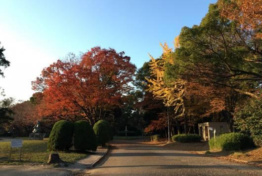 気分転換に最適!名古屋市内のぶらりお散歩スポット ~名城公園~
