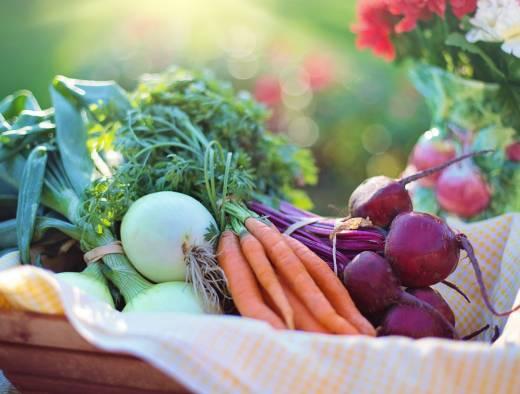 ベランダでもできる!家庭菜園の魅力とおすすめの野菜を解説