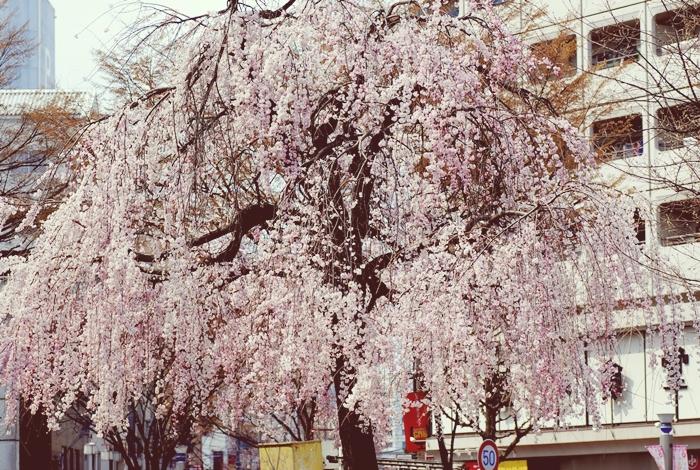 新栄町は視野の広いシティーボーイ