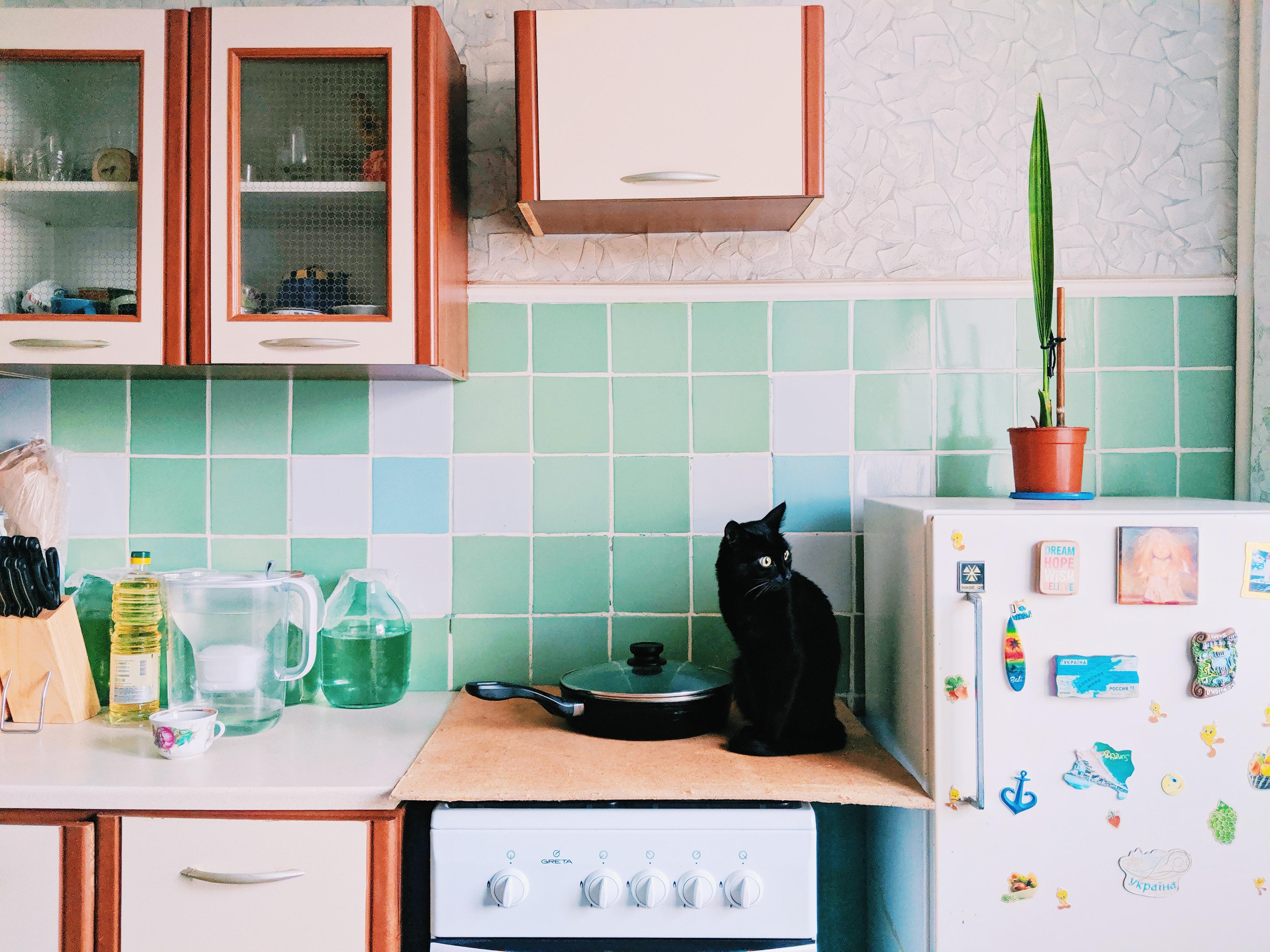 賃貸一人暮らしで憧れのペットライフ!飼いやすい犬猫特集